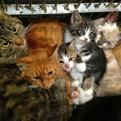 NPO法人 動物愛護団体エンジェルズ 猫の譲渡会 サムネイル3