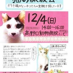 猫の譲渡会♡はしもとさくら猫の会「和歌にゃんず」