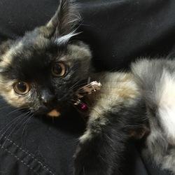 美猫すぎるー♡