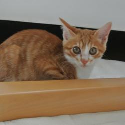 「戸田市の美猫マロンちゃん♪♪」サムネイル3
