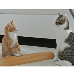 「戸田市の美猫マロンちゃん♪♪」サムネイル2