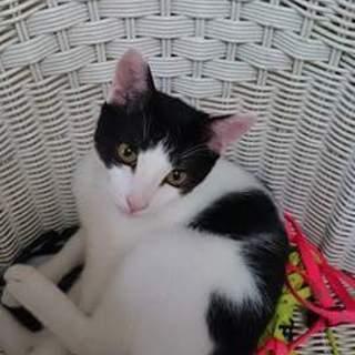 チーム八代(火の国cats)ジル・ベル・シフォン