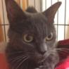 甘えん坊のおばあちゃん猫のシャもちゃん サムネイル2