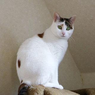 美しい三毛猫さんです