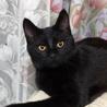【黒猫】のんびりとした男の子