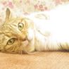 福島被災猫、高齢者応募可(条件あり) サムネイル2
