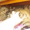 福島被災猫。なでなで大好き! サムネイル3