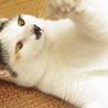 天真爛漫!犬も猫も人も大好き! サムネイル3