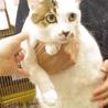 福島被災猫。怖がりですがとっても可愛い!
