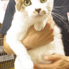 福島被災猫。怖がりですがとっても可愛い! サムネイル2