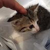 子ネコちゃんの里親探しています!!