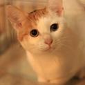 和猫の雰囲気全開!クールな美猫ちゃんですが・・・