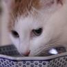 和猫の雰囲気全開!クールな美猫ちゃんですが・・・ サムネイル2