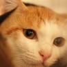 和猫の雰囲気全開!クールな美猫ちゃんですが・・・ サムネイル3