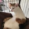 和猫の雰囲気全開!クールな美猫ちゃんですが・・・ サムネイル4