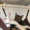 和猫の雰囲気全開!クールな美猫ちゃんですが・・・ サムネイル5