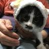 ガシャポンで猫のかぶりものがありました。