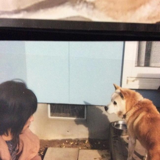 Gintaのカバー写真