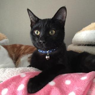 キレイなしっぽの黒ネコ*トライアルへ