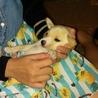 かわいい子犬が産まれました