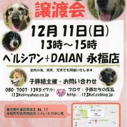 子豚組主催・犬猫譲渡会@東京都杉並区永福町