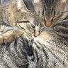 飼い猫の粗相について