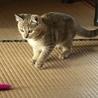 《一時停止中》可愛いトラ柄のサビ猫女の子