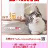 猫の譲渡会、開催♪(12月10日(土)13~16時、@府中)【府中猫の会】