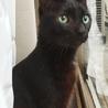 黒猫、シャープな体型、とっても甘えん坊