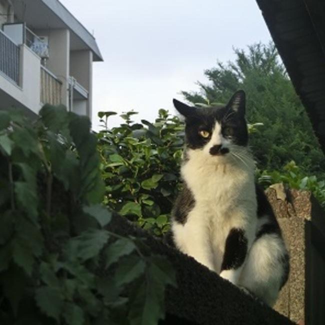 猫のはこぶねのカバー写真
