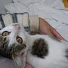 交通事故で保護・入院中のキューちゃん サムネイル6