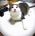 人懐っこさNo.1☆河原猫ゆうすけくん