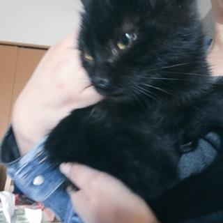 急募*3ヶ月の黒猫男の子です