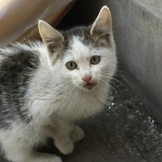 ☆急募☆人なつこいかわいい子猫です