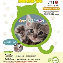 第二回 シェルター型幸せ探し猫カフェ Qsmet(くすめっと) 譲渡会