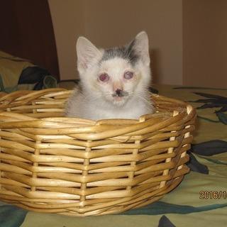 全盲のマロ君生活は普通の猫と変わりません