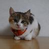 小柄で可愛い三毛猫
