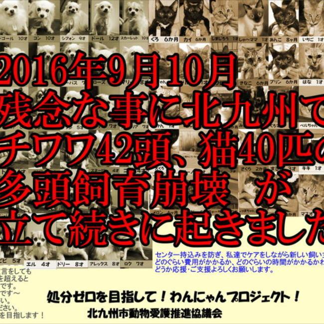 北九州市動物愛護推進協議会(推進員)のカバー写真