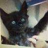 保健所に2か月の子猫がいます!