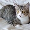 [トライアル決定]目が大きな美猫お転婆にゃん