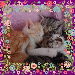 『ねこ猫ネコの会』の保護猫ちゃん達に応募はこちら