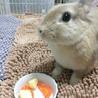 【ミニウサギ】スウちゃん(仮)多頭崩壊から保護 サムネイル5