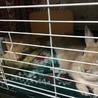 【ミニウサギ】スウちゃん(仮)多頭崩壊から保護 サムネイル2