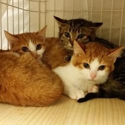 12月10日(土)・11日(日)地域猫から社会猫へ・四谷里親会(ボランティアも募集中)