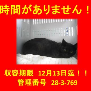 期限12月13日迄!綺麗なお顔の黒猫ちゃんです!