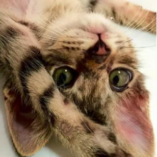 火の国catsチームシンキンズ 優しいご家族募集中