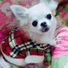 ichigo_joha_luna さん