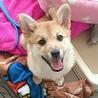 イケメンの3カ月の子犬「ちゅる君」です!