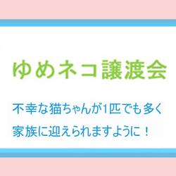 ☆★ ゆめネコ譲渡会 ★☆ 東京駅 八重洲口 徒歩3分 サムネイル2