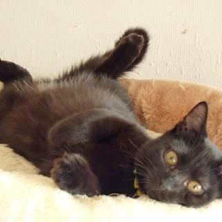 マイペースでぬいぐるみのような黒猫